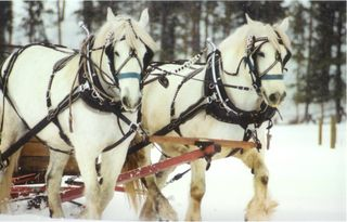 Percherons_72
