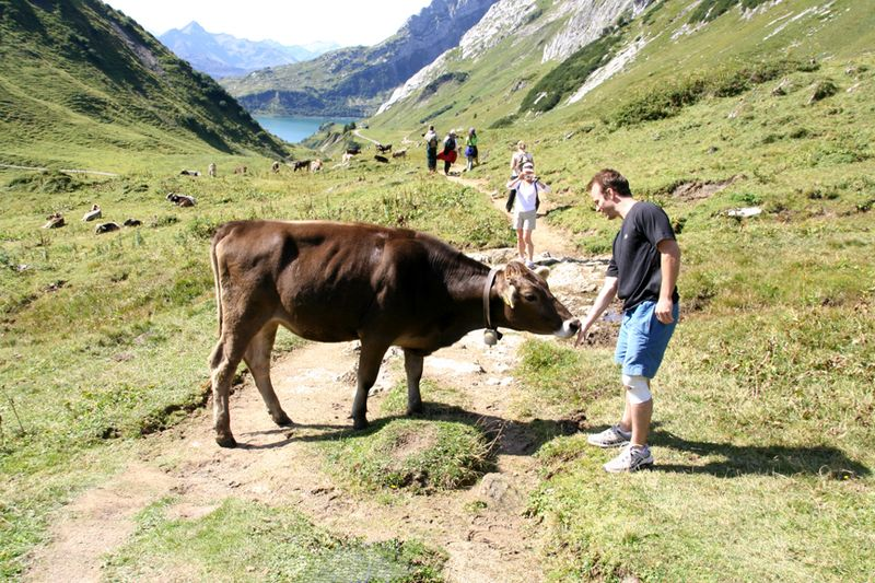 LechHikeToSpullersee&Cow