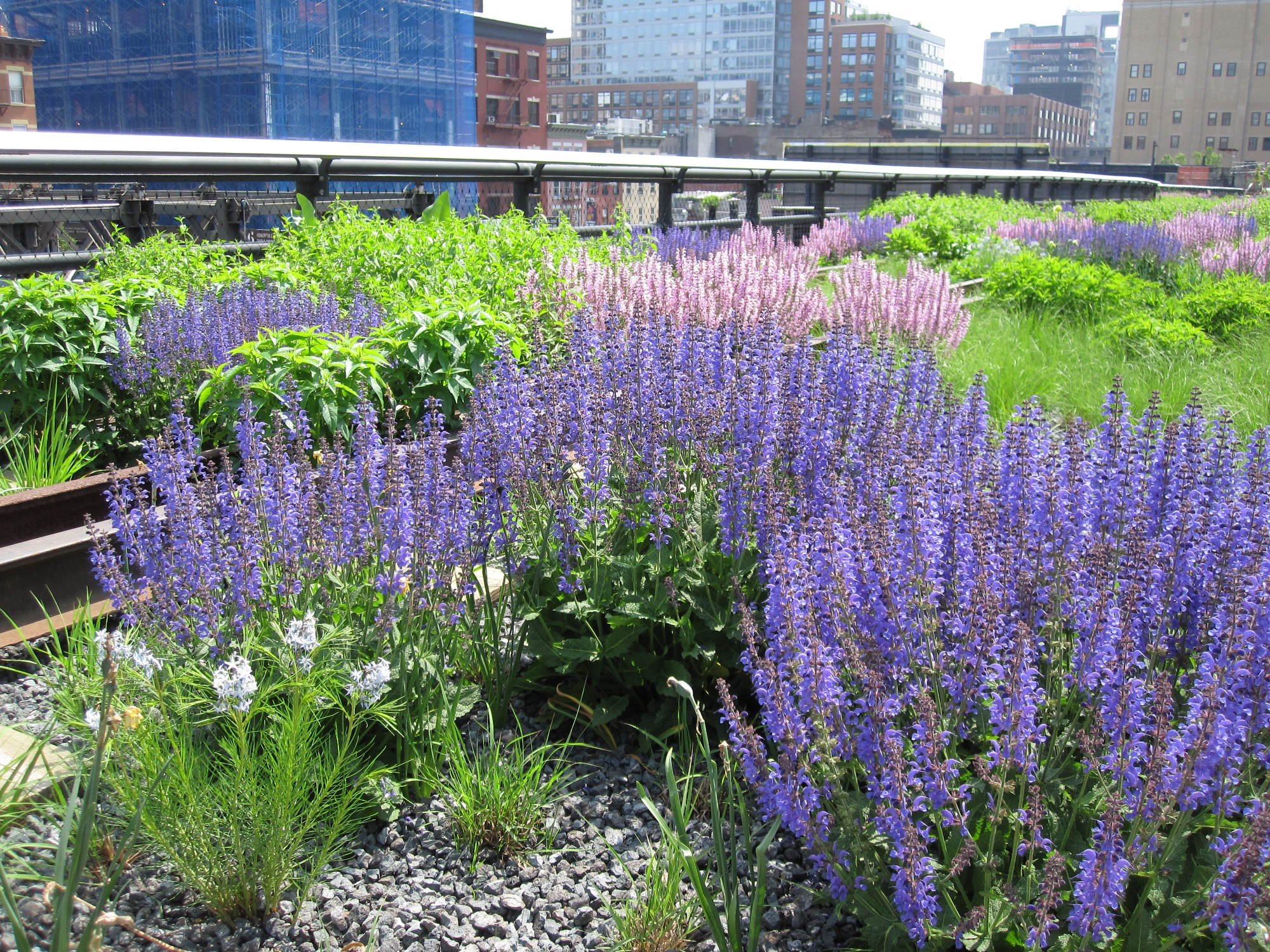 10 Reasons to Love the High Line in NYC – Everett Potter s Travel Report