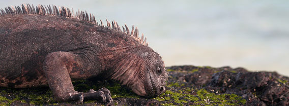 On the Galapagos Islands with Myths & Mountains