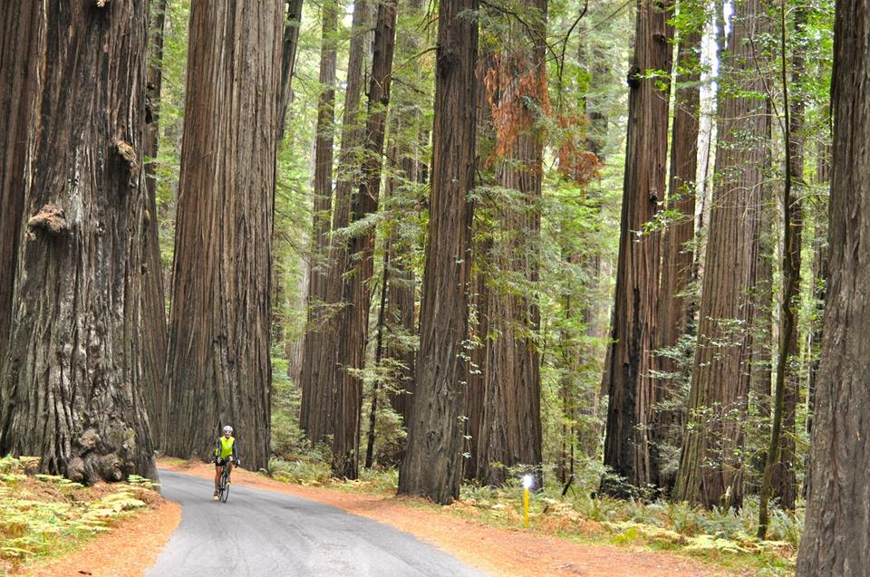 Cycling Avenue of the Giants in California. Photo by Hank Cunningham