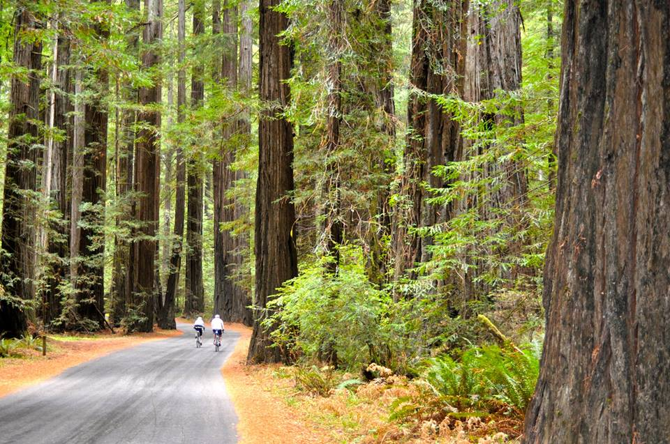 Cycling in Humboldt Redwoods State Park in California. Photo by Hank Cunningham