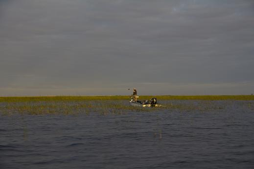 Notable not only for its size (731 square miles) as the largest U.S. lake located enitrely in one state, Florida's Lake Okeechobee is also widely regarded as the nation's premier bass fishing lake. Shallow flats fringed with Kisseemee grass,  as seen in this photo made near Clewiston, are the favored fishing grounds of anglers in the know as they provide cover for the lake's lunker large-mouth bass.