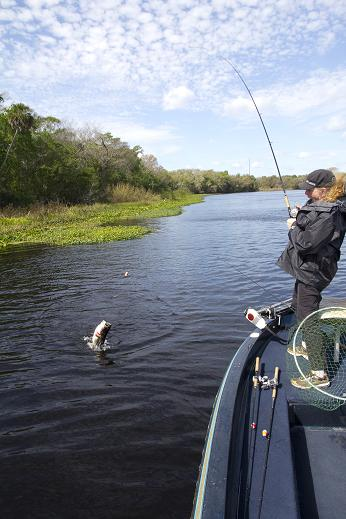 Melinda Renner, of Charlo, New Brunswick, lands a largemouth bass on the St. Johns River near Deland, FL