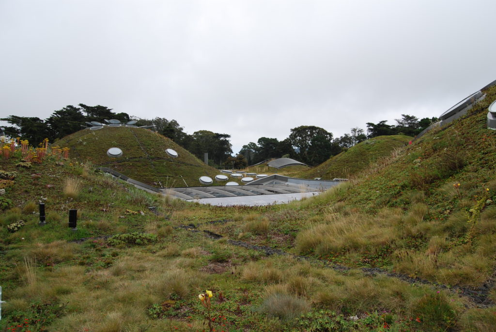 The living roof at the California Academy of Sciences