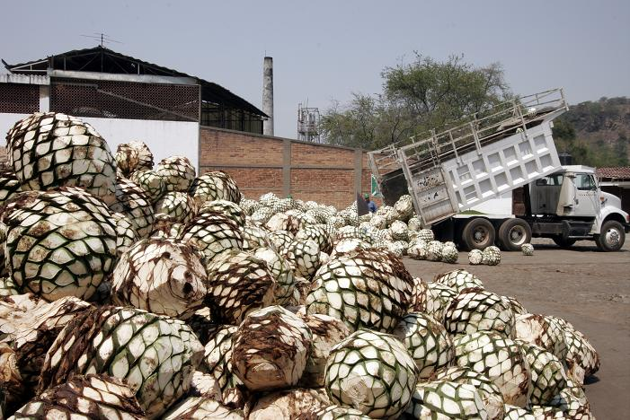More than 400 tons of agave are prossessed daily for distillation into tequila at Sauza's La Preservancia Distillery, Jalisco, Mexico. Dave Houser Photo.