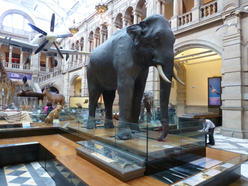 Inside The Kelvingrove Museum, Glasgow