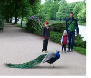 A Warsaw family encounters a peacock in Lazienki Park.  Photo Monique Burns.
