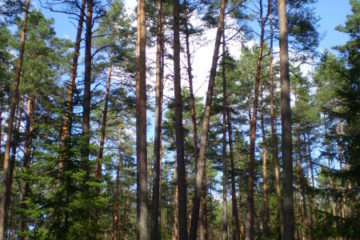 Forest is at the heart of Estonia