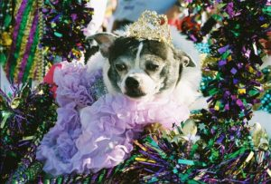 Krewe of Barkus Puppy. Credit: www.monsoursphotography.com