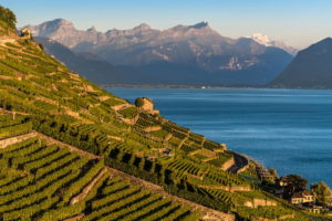 The Lavaux vineyards, a UNESCO World Heritage Site, alongside Lake Geneva, Switzerland.
