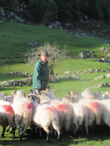 The shepherd and his flock on Kissane Farm in Kerry.