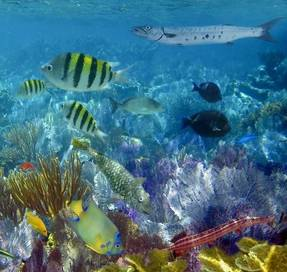 A reef in Aruba.