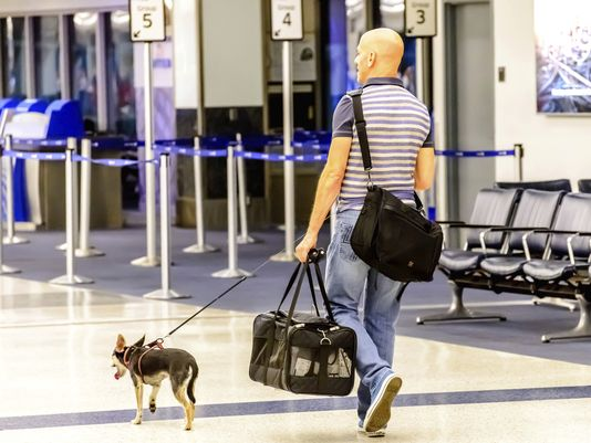 More than two million pets are flown by the nation's airlines every year. (Photo: Getty Images)