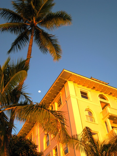 Hotel and palm.