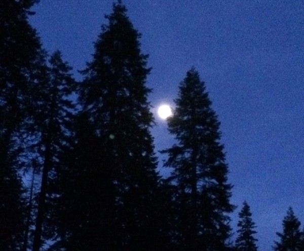Sequoia moon. Photo by Effin Older.
