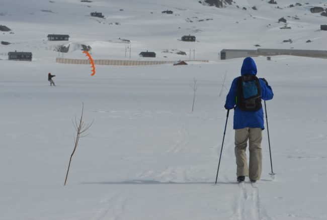 A skier follows the twigs along the trail.