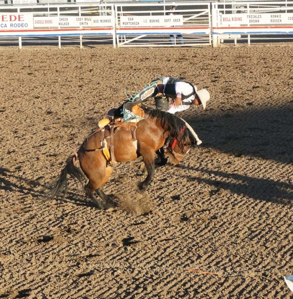 Rodeo Buffalo Bill And Japanese Americans In Cody